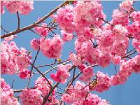[吐槽]别争了!樱花不是你们的!那些都不是你们的!