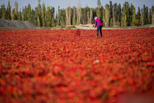 新疆火红戈壁 辣椒铺公路两侧
