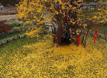 图为飘落的叶子