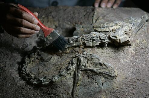 """这两具恐龙化石分别为""""巨型禄丰龙""""和""""许氏禄丰龙"""""""
