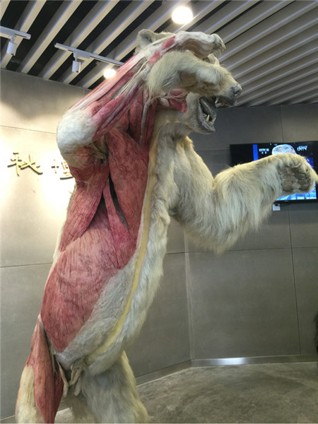 北极熊的身体构造!