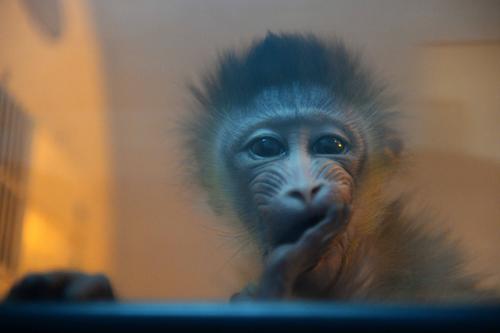 猴年去成都动物园看松鼠猴宝宝