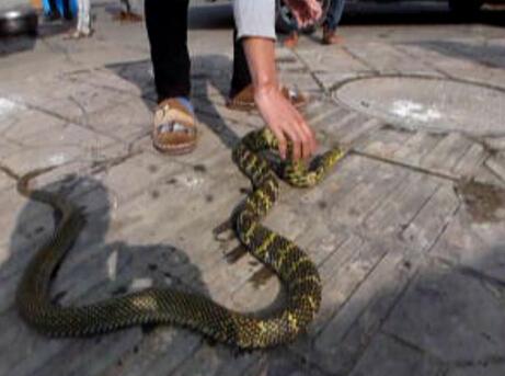 这些蛇有菜花蛇 乌梢蛇