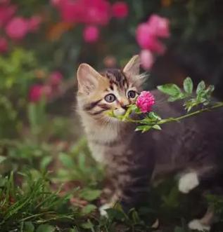可爱猫咪亲吻图片