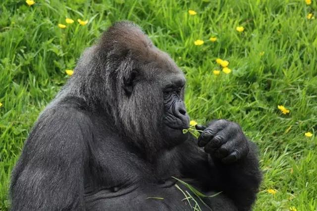 当动物亲吻花朵 真是萌化咯!