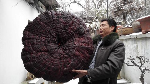 洛阳根雕艺人孙国峰正在他的工作室小院内