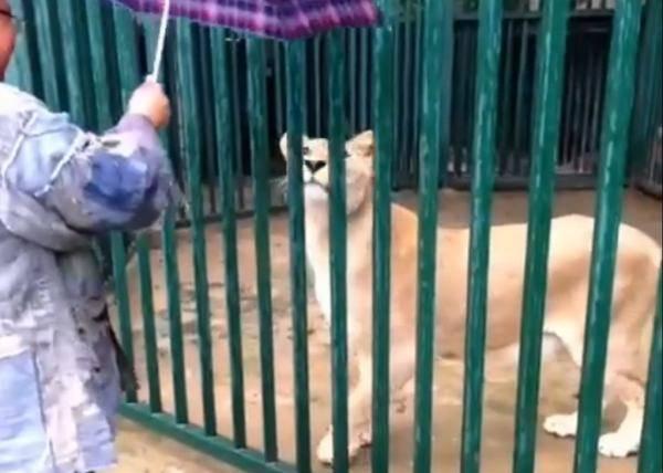 西安秦岭野生动物园却否认曾接收净业寺的狮子
