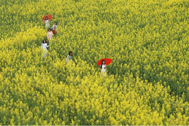 春天风景微信头像图片