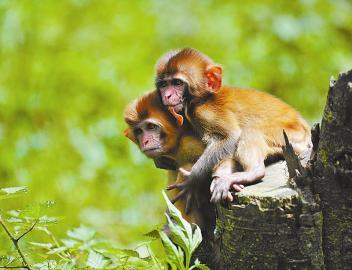 大自然生态平衡,营造人与动物共存共荣的和谐环境
