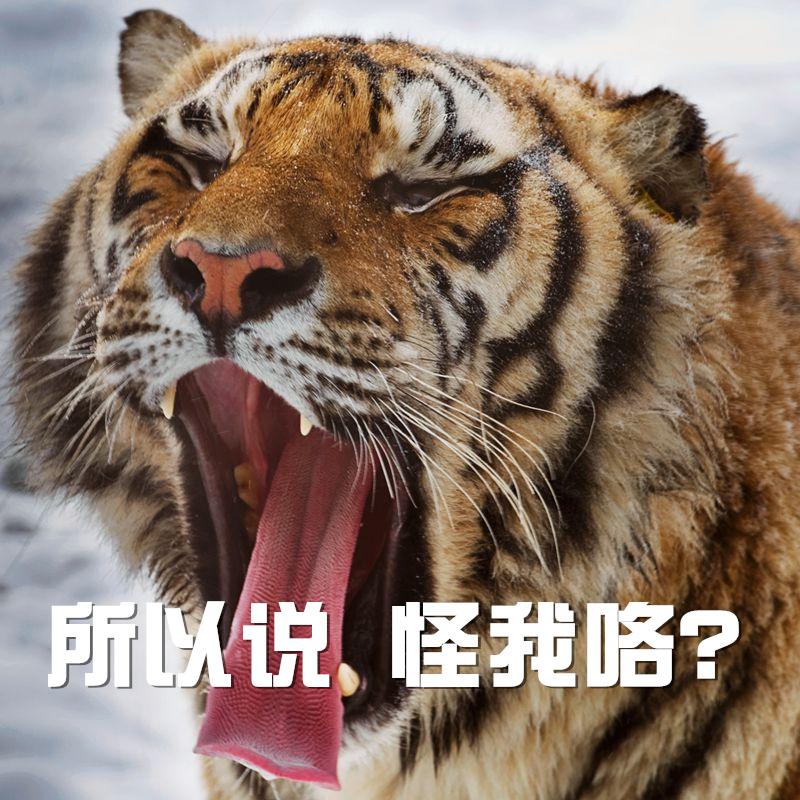 【投票】八达岭野生动物园女游客被老虎咬