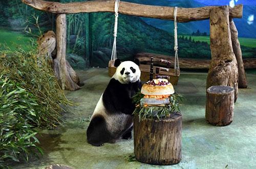 但台北动物园的保育员