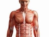 什么是横纹肌溶解症