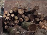 成都青年检察官路过山林发现盗伐木材 即刻追截