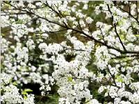 看花到底哪家强?成都春季赏花地图发布