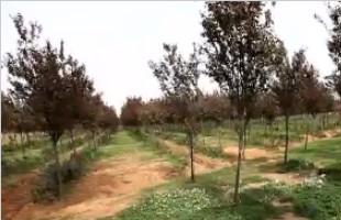 今年植树节成都规划39个植树点位 可认养