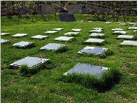 成都实现节地生态葬全覆盖 鼓励绿色环保过清明