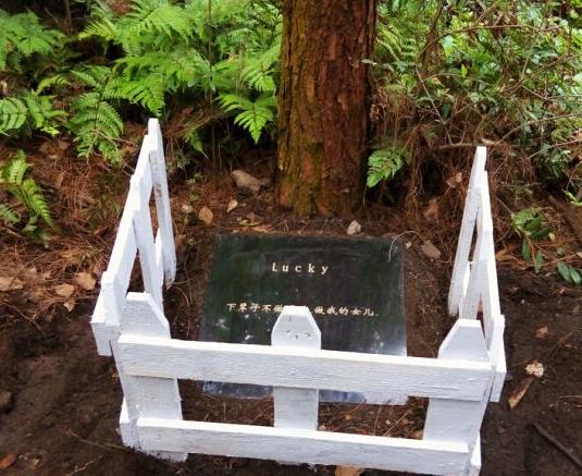 """""""宠物公墓""""突然被挖 是事出有因 还是殡葬骗局?"""