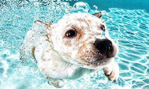 狗狗腹水症的症状则主要原因