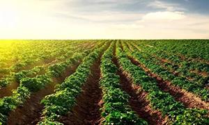 中央财政安排230亿元支持农业适度规模经营