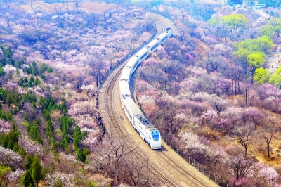 开往春天的列车 成铁加开赏花列车助兴四月<font color=red>春游</font>