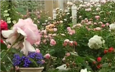 """成都版""""空中花园"""":""""无土""""栽培百种玫瑰 四季有花开"""