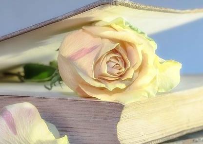 世界读书日  说说你一年能读多少本书?