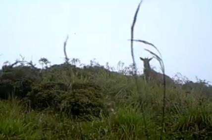 三种珍稀野生动物首次同框出现!彭州生态保护成效显著
