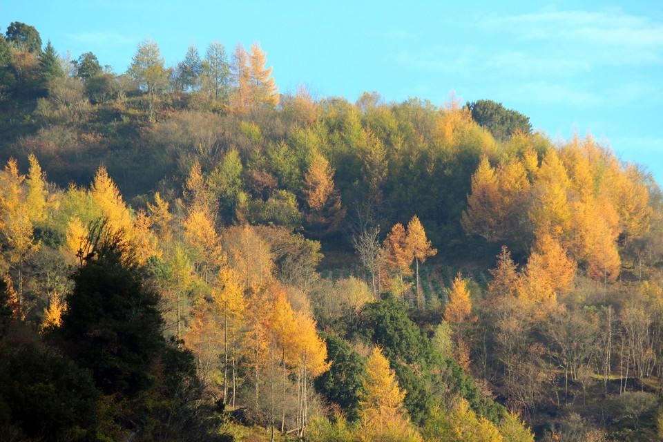 无边的森林带来无限通透的空气 图据月桂