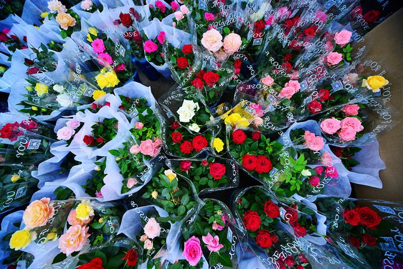 淘宝鲜花图片素材
