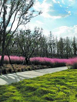 八天环城赏绿道︱江家艺苑的春暖花开等你看