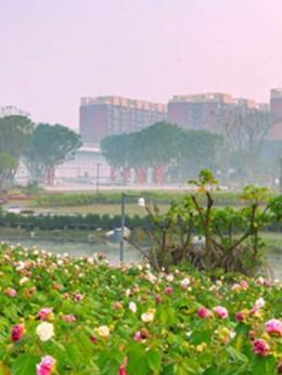 八天环城赏绿道︱来青龙湖公园愉悦身心 欢乐斗舞
