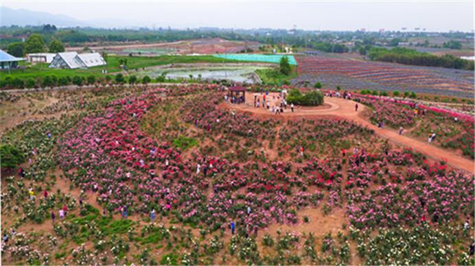 奏響鄉村振興樂章!青白江打造國家級農業對外開放合作試驗區