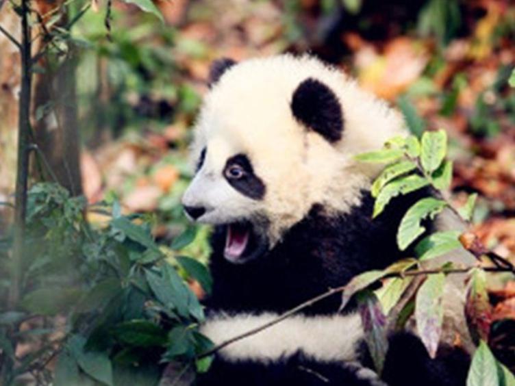 幸运分分彩熊猫亚洲美食节来啦!5月,来幸运分分彩寻香寻味