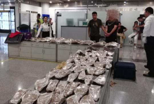 案值1164万元 成都海关截获91个濒危石首鱼鱼鳔