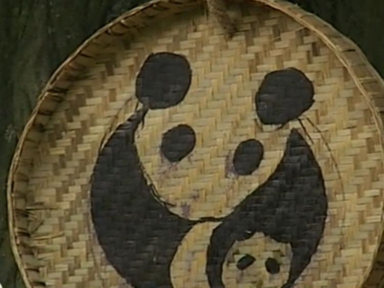 国庆出游 记者教你快速玩转熊猫基地
