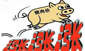 2019/10/21每日财经:猪肉概念领涨