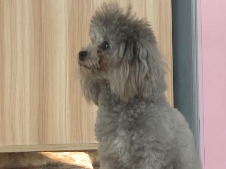 【访谈】狗狗也能买保险了 你知道吗?