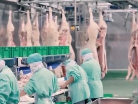 猪肉每公斤再降4元 四川省全力推进生猪恢复生产和转型升级