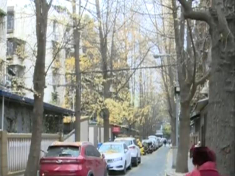冬季锦绣巷 银杏已落景犹在 霎时金黄入人心