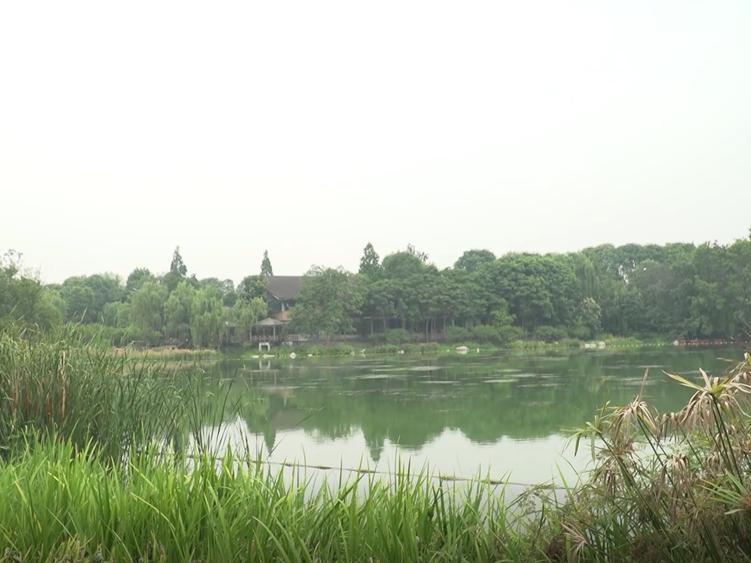 探寻十五分钟健身圈:感受浣花溪公园的动与静