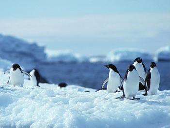 """""""阻止新冠进入冰层"""" 多国削减南极科考人员"""