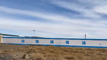 今日入境!蒙古国捐赠的首批活羊真的要来了