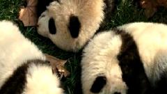 成都熊猫国际旅游度假区城市空间品质提升改造工程预计4月底竣工