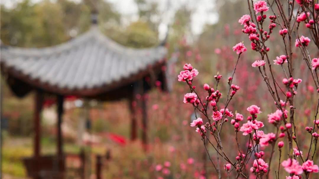 赏花、观光、玩游戏……这个春天,不来这儿耍就太可惜了!
