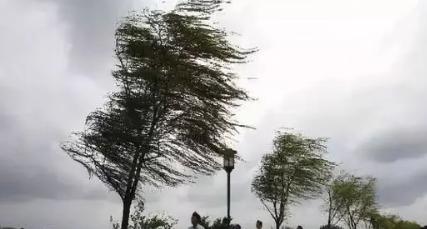 成都发布大风蓝色预警信号 平均风力可达6级以上
