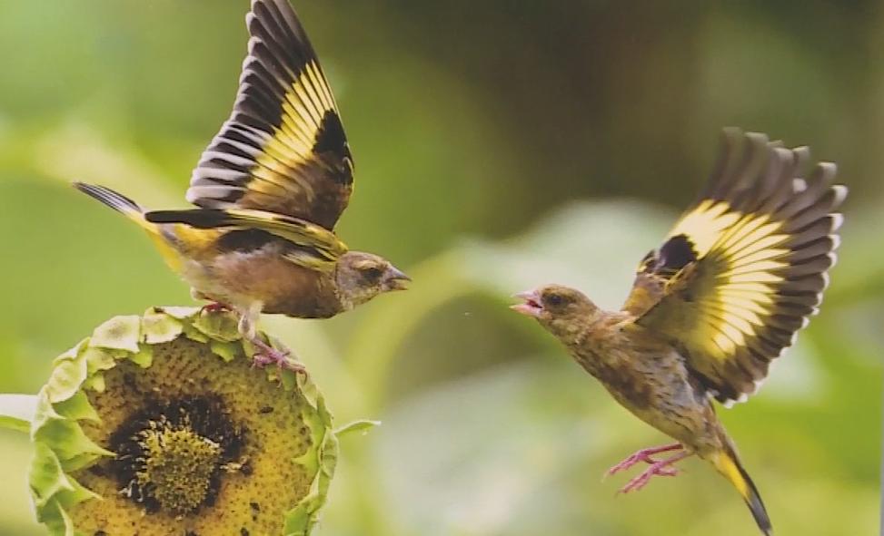 天府之翼·2021年成都鸟类摄影展开展 近千幅作品等你来赏